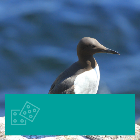 All About Seabirds Quiz