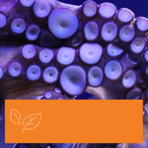 Guess which Octopus this is…